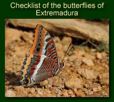 http://www.extremadurabirds.net/Checklist_Butterflies.pdf
