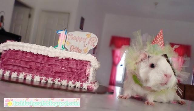 guinea pig birthday