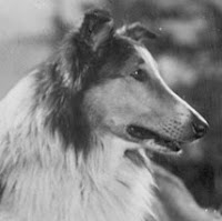 the real name of Lassie was Pal