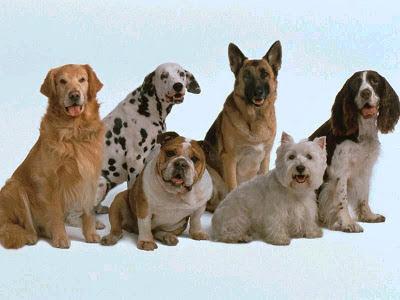perros de diferentes razas, pequeñas, grandes