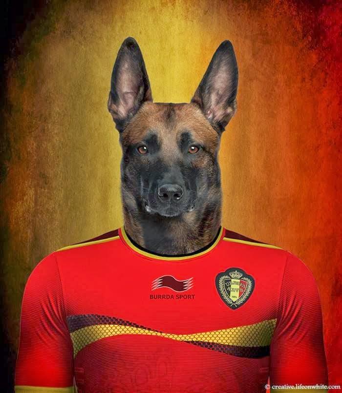 Belgium – Belgian Shepherd