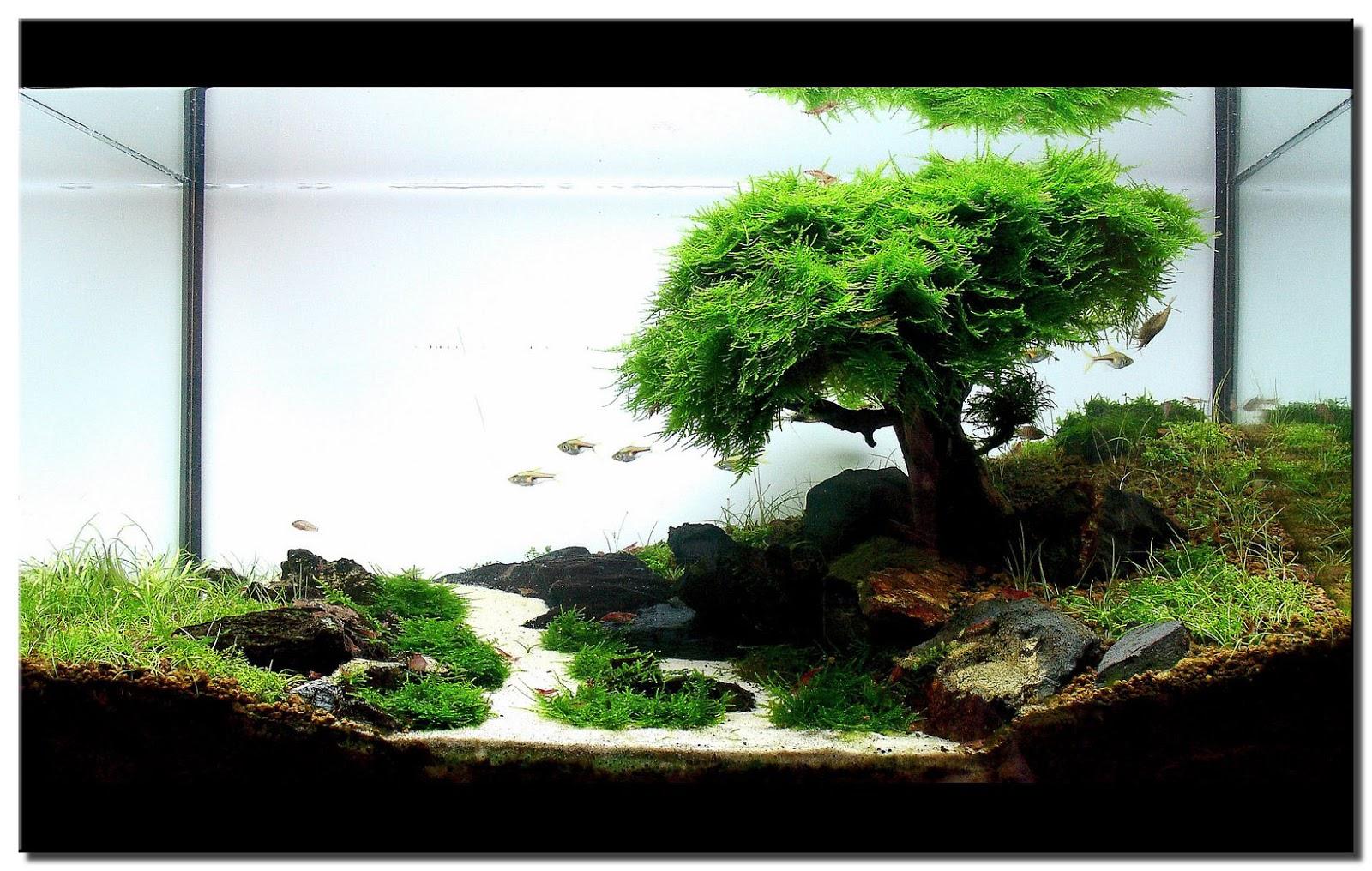 Aquarium Aquascape Pasir Silica Daftar Harga Terbaru Dan Malang Karungan Adalah Istilah Bercocok Tanam Dalam Airdimana Tanaman Hidup Di Air