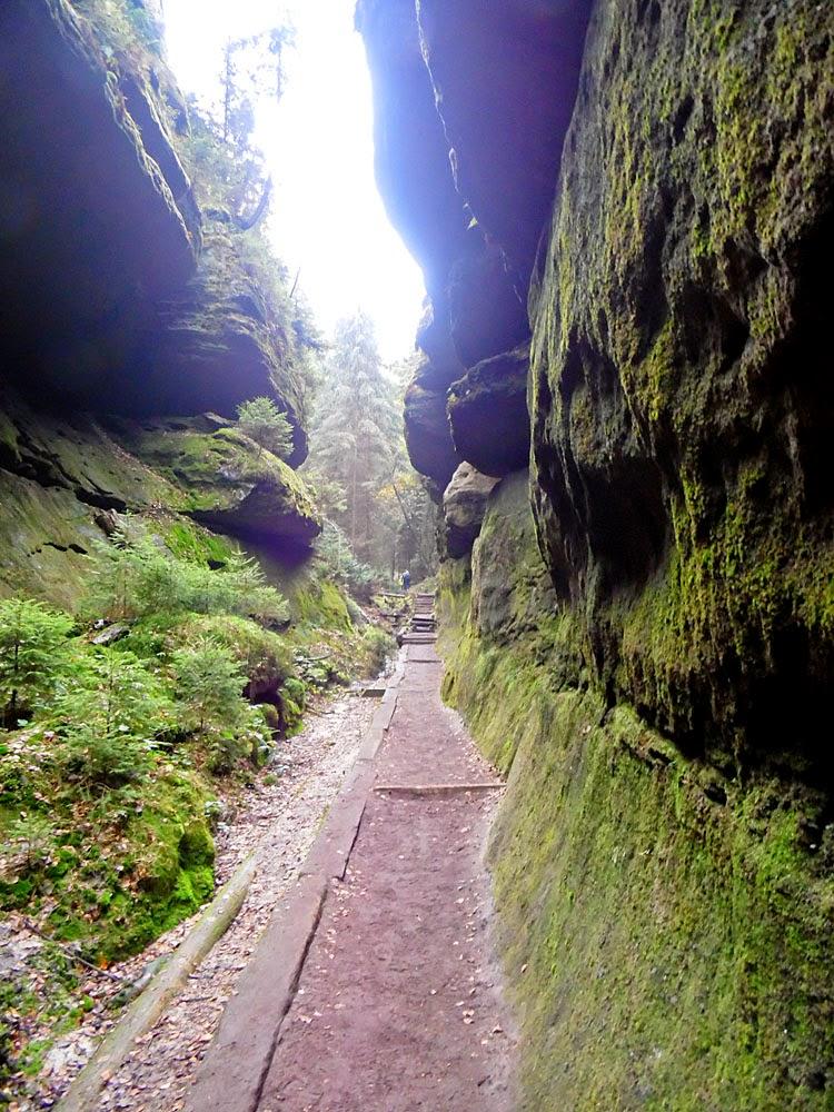 photo taken in the Sächsische Schweiz by Andie Gilmour