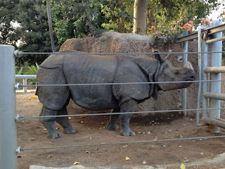 Rhinoceros waiting for dinner at the San Diego Zoo