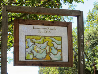 Taramasso Ranch - This is How I Want My Chicken Raised