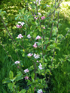 Starting a new orchard is worth while, you just need patience #gardening