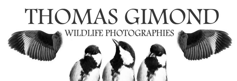 Thomas Gimond wildlife photography