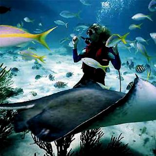 Scuba Diving in Boracay Island Philippines