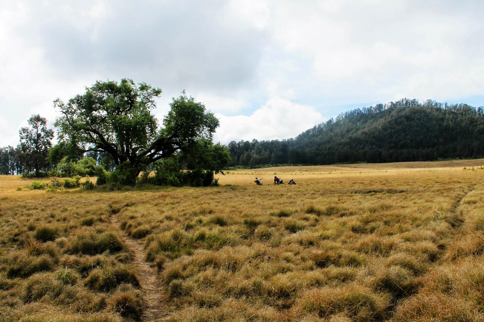 Catatan pendakian Argopuro