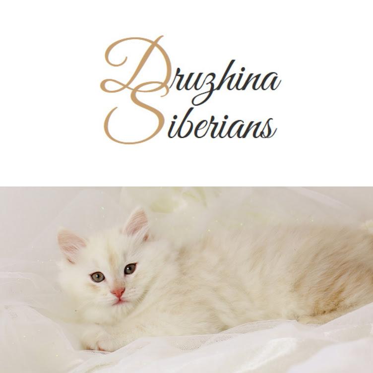 Druzhina Siberians