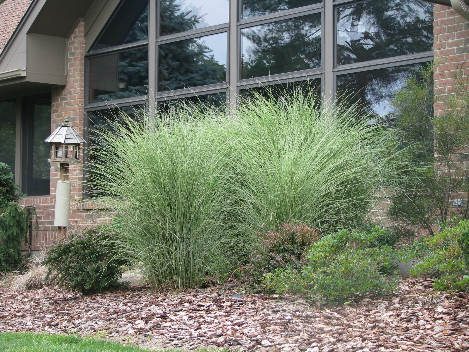 Calgary real estate blog christina in petrotown easy for Landscaping with zebra grass