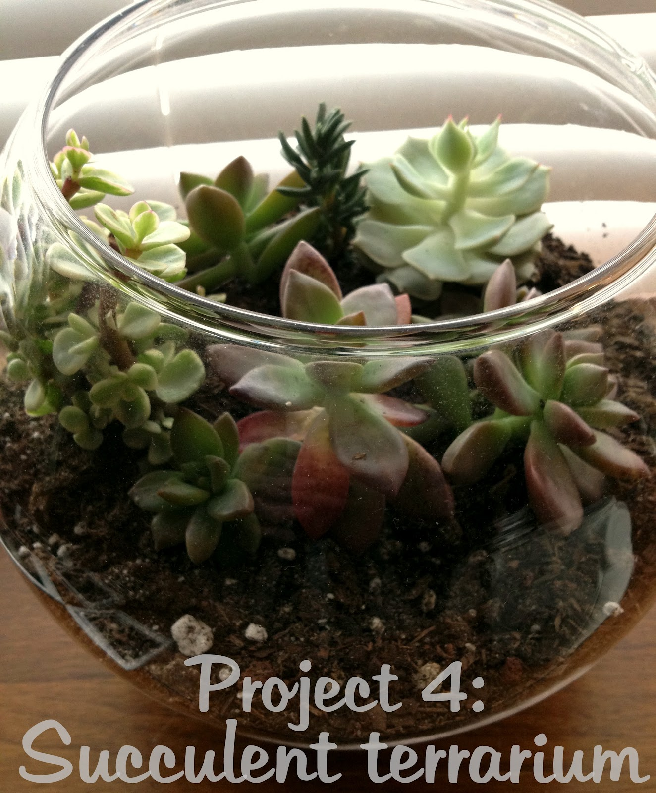 12 Projects In 2012 Open Succulent Terrarium Campfire Chic