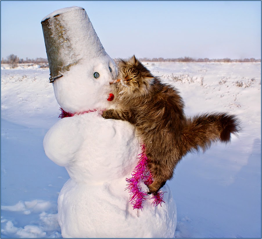 Image result for cat in the snow