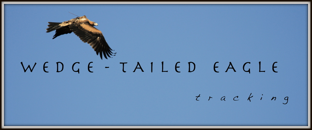 Wedge-tailed Eagle Tracking