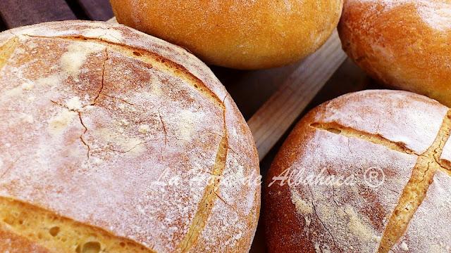 Pan casero, Harina de Semola, trigo duro