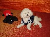 my sweet dog