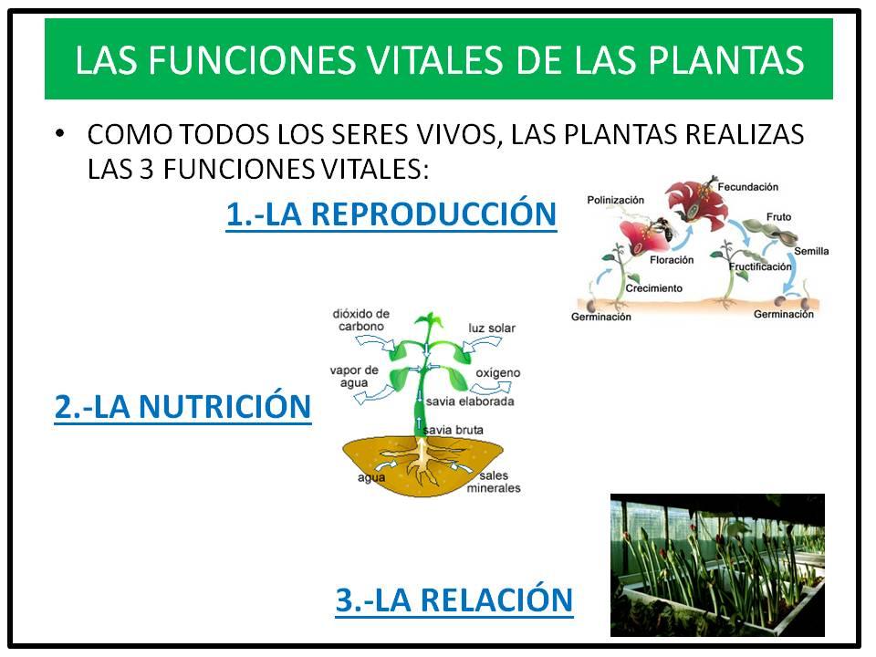 Cosas de ni os para la escuela funci n vital de las for Funcion de las plantas ornamentales