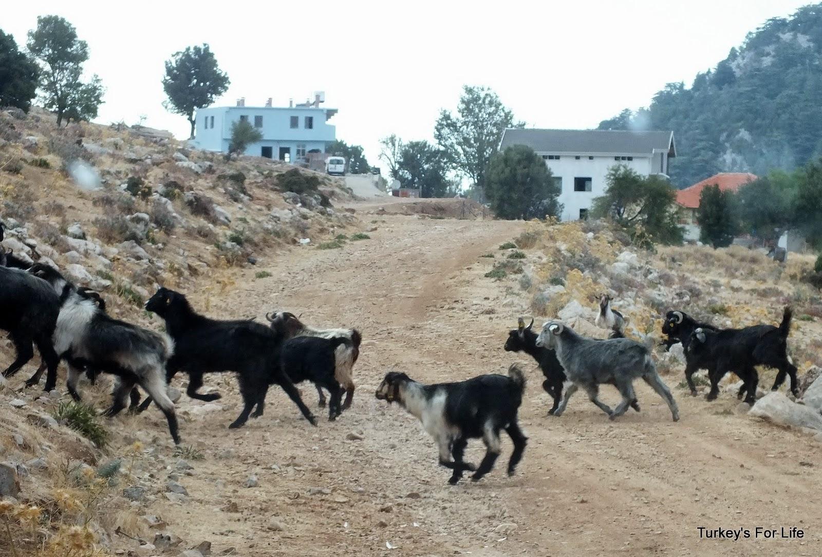 Babadağ Mountain Wildlife