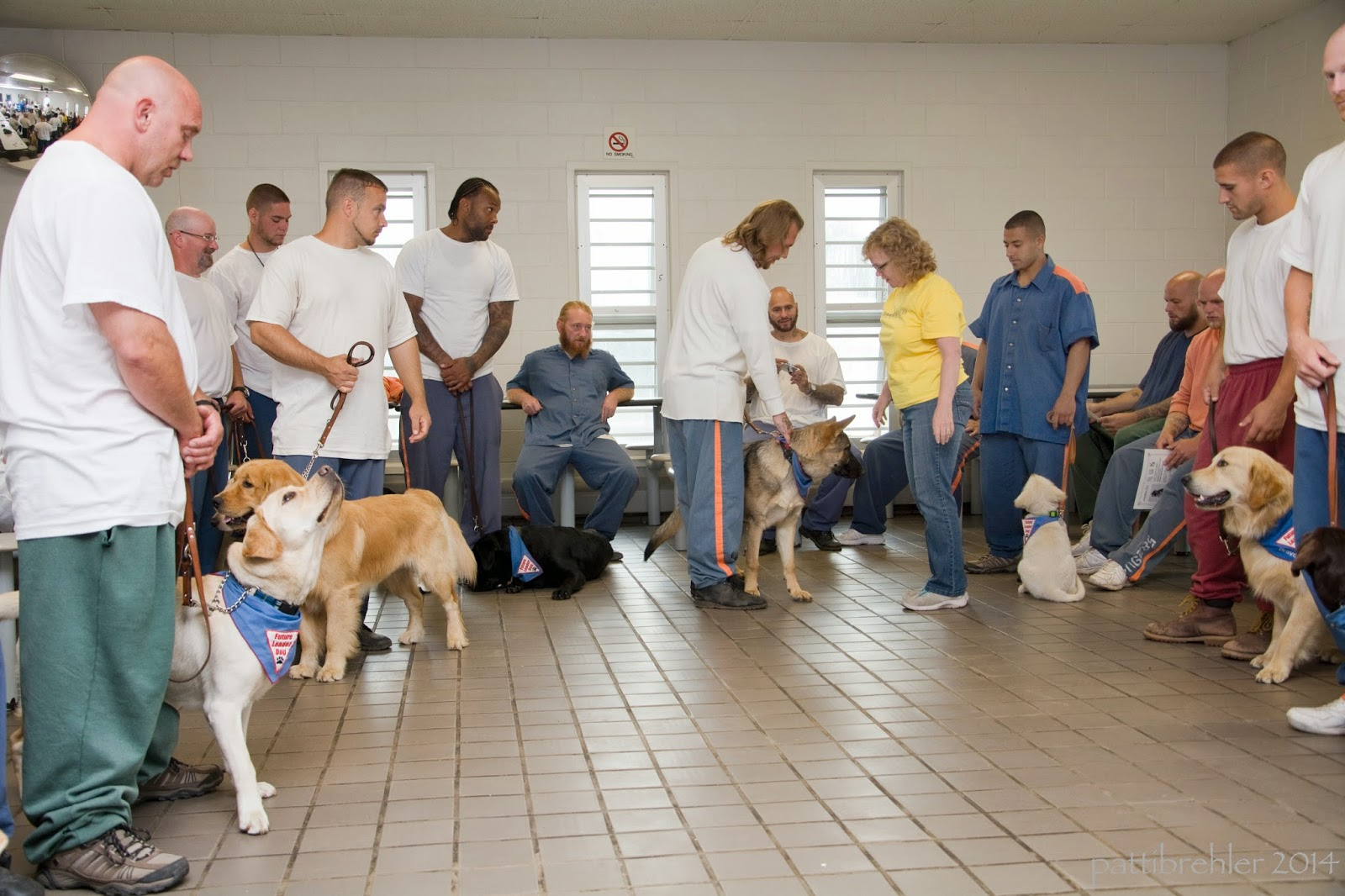 More than a dozen men and one woman are standing or sitting around a room. The men are wearing prison garb, blue or green pants with white t-shirts or blue shirts. The woman is wearing blue jeans and a yellow shirt. There are many puppies with the men, some golden retrievers, black and yellow labs, and one german shepherd. The woman is going to each team and greeting the handler and dog.
