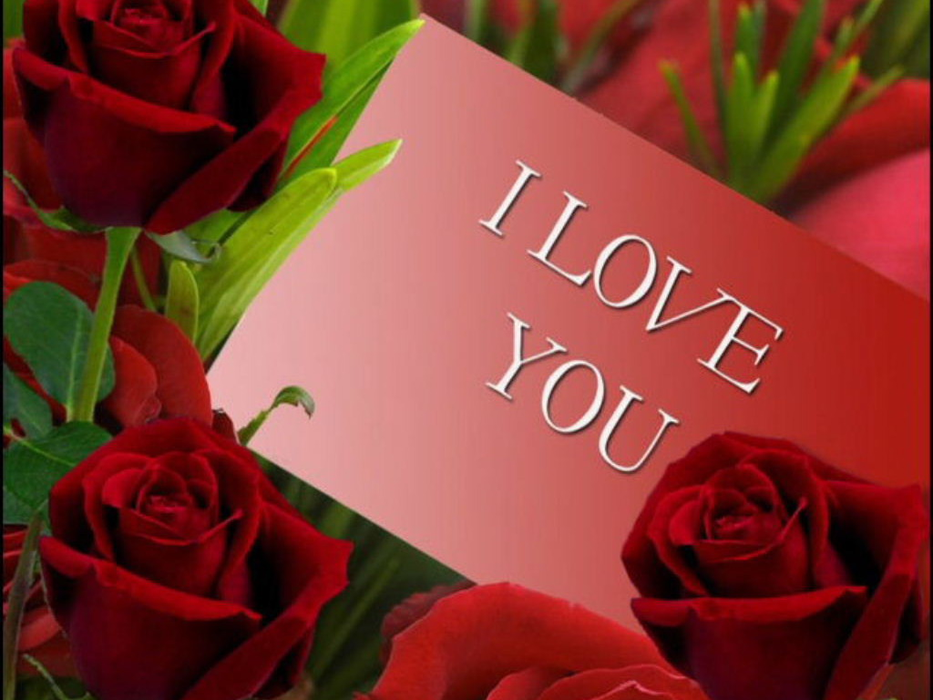 Beautiful Red Roses I Love You Images HD