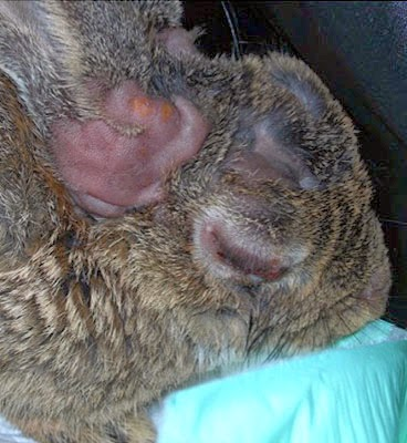 2014 ~ Clínica Veterinaria El Guirre