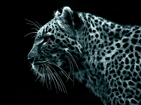 it 39 s hd animals funny wallpapers amazing phone wallpapers