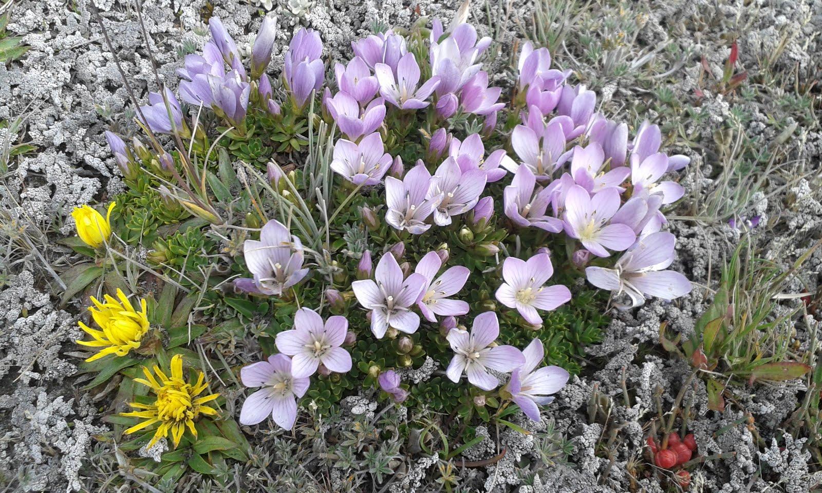 Z wdzięcznością - ekwadorskie, wulkaniczne kwiatki