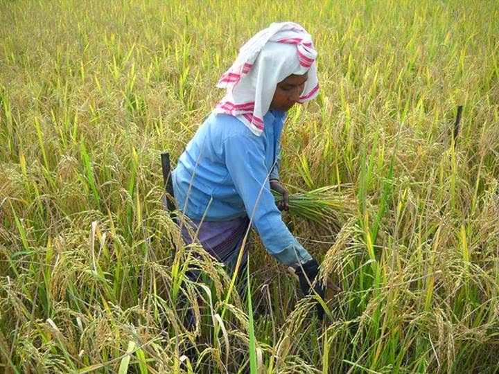 সেউজী ধৰণী seuji dharani an essay on role of women in  an essay on role of women in agriculture