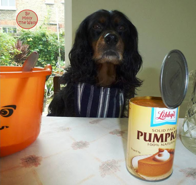 Molly The Wallys' Barking Bakes for Halloween 5
