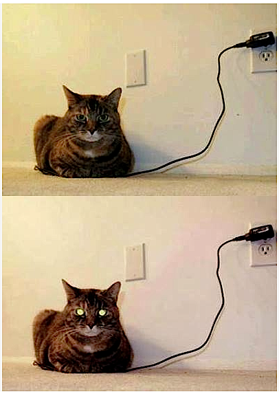 Charge Cat Fully Loaded
