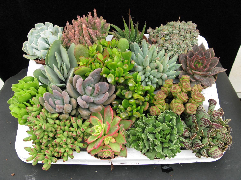 Vida a lo verde living in green plantas para el for Plantas crasas interior