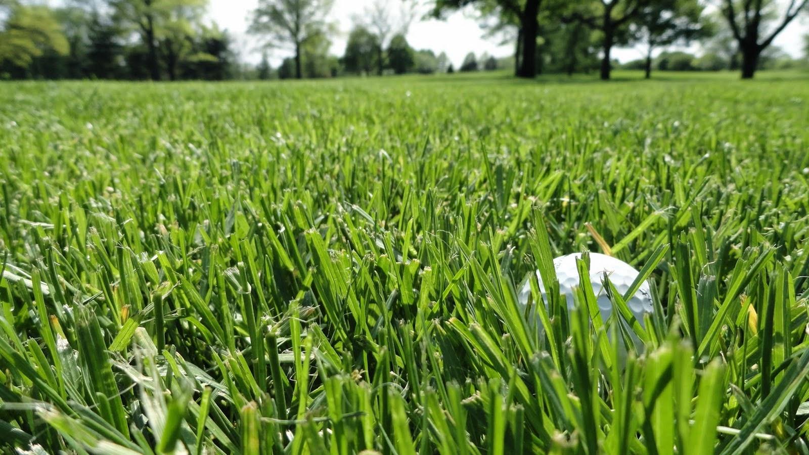 Kết quả hình ảnh cho rough on a golf course