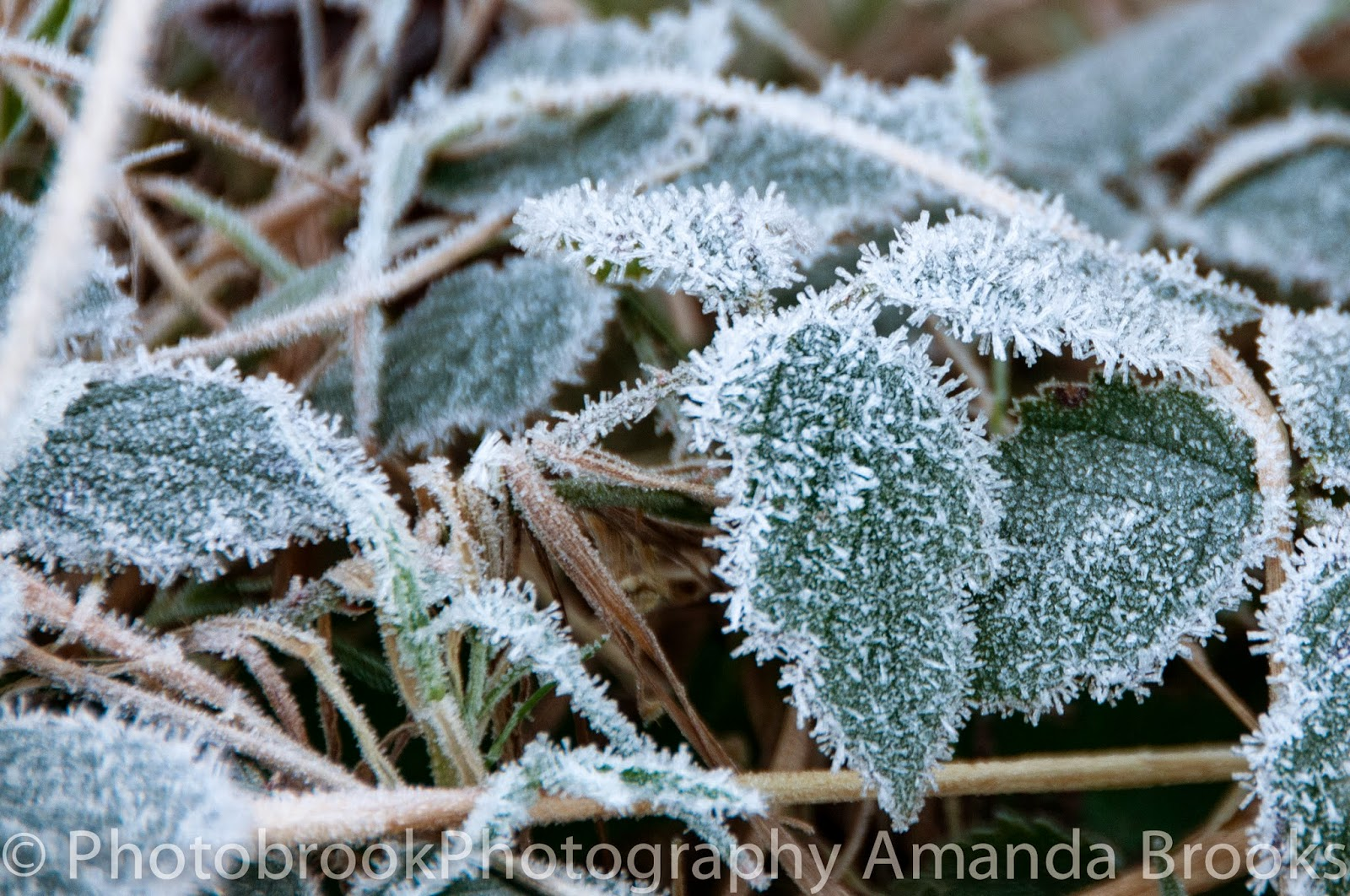 Frost forming on plants