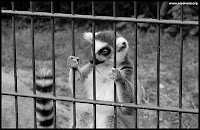 Giant Panda bites its keeper at the San Diego Zoo – Cal/OSHA Investigates