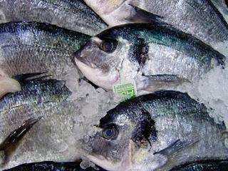 La disminución del tamaño de los peces agravará los