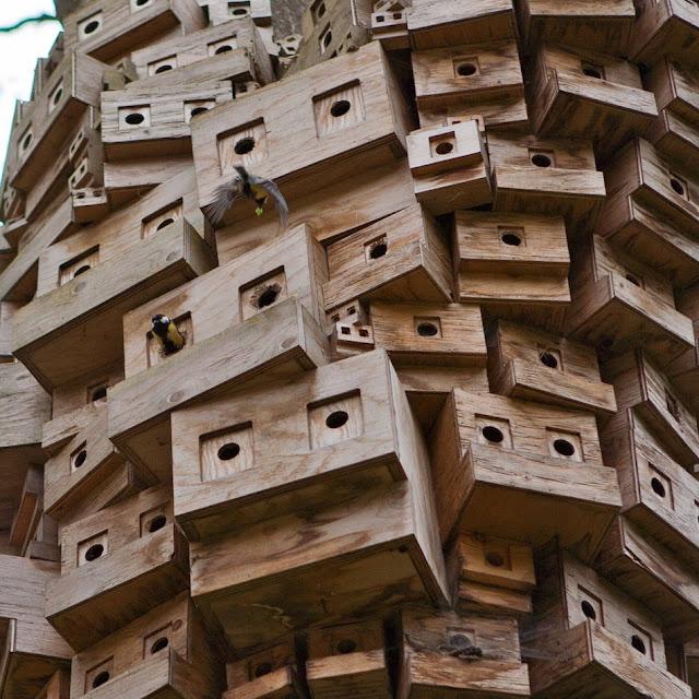Spontaneous City in The Tree of Heaven by London Fieldworks