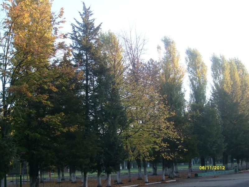 Погода сокол вологодской области на 7 дней