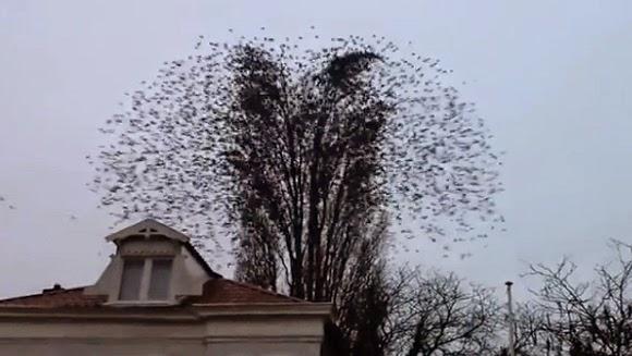 Birds Fly Simultaneously Away