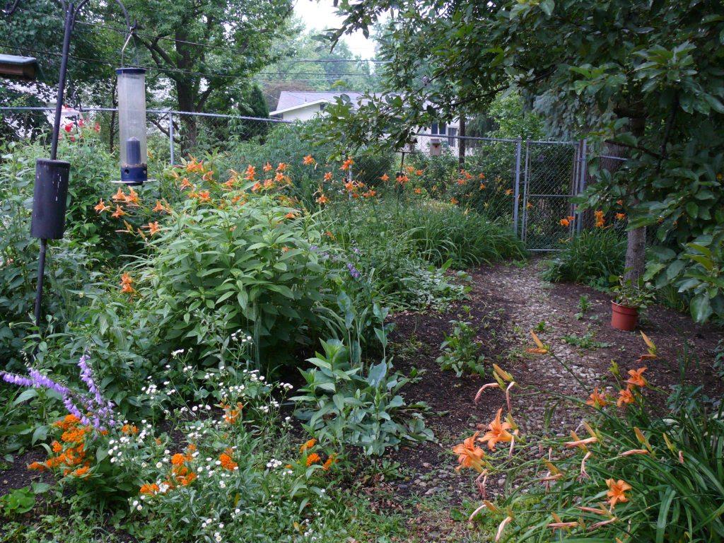 a suburban jungle ohio birds and biodiversity