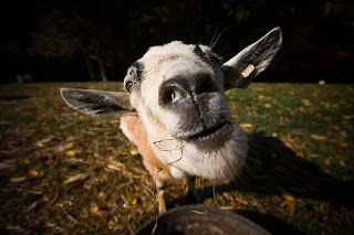 ملف كامل عن اجمل واروع الصور للحيوانات  المفترسة   حيوانات الغابة  1662920759_a8b78ae8bd