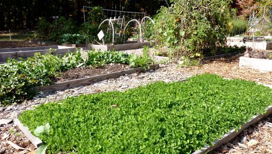 Image Result For How To Start A Garden Landscape