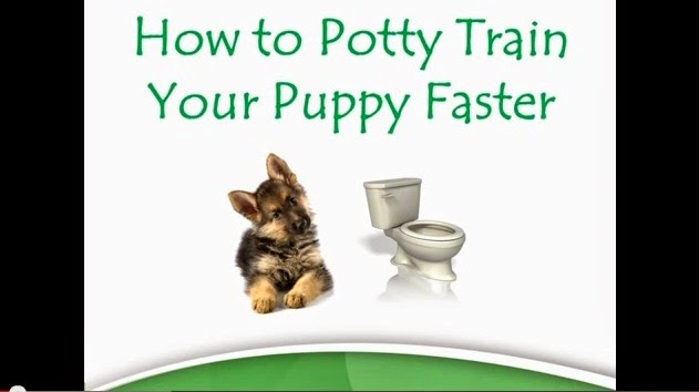 potty pads puppies that works, how to paper train your puppy, how to potty train a dog