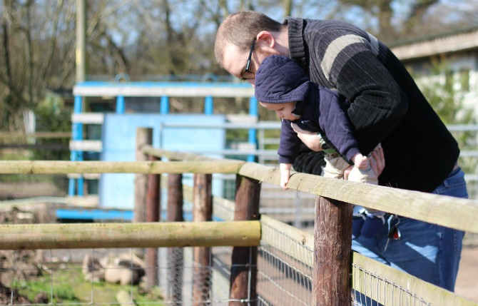 Daddy and Squidge looking at pigs