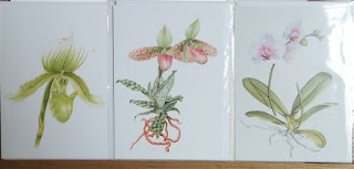 Orchid Cards©Polly o'Leary2015