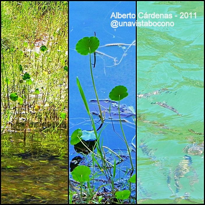 Plantas Acuaticas Hidrofitas Son Plantas Adaptadas A Los