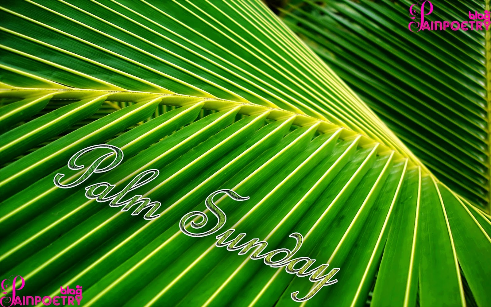 Palm-Sunday-Palm-Image-HD