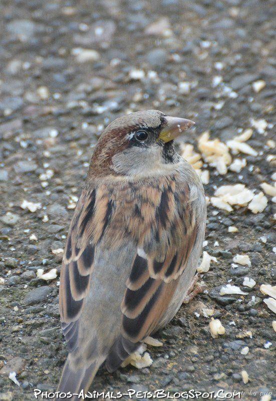 http://4.bp.blogspot.com/-JkXtGEnhzfA/Tt-boINK6jI/AAAAAAAACoM/U5UnWBuJQOM/s1600/sparrow%2Bbird%2Bimages.jpg