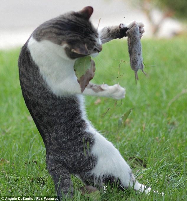 89  Gambar Kucing Dan Tikus Kekinian