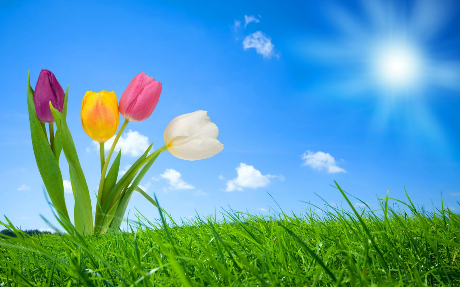 High Resolution Nature Colorful Flowers With Blue Sky And Green Garden 3D Fantasy Wallpapers