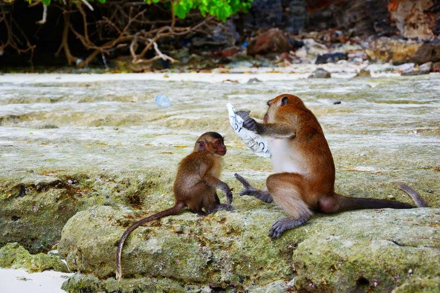 Monkey Beach na Koh Phi Phi Leh, Tajlandia